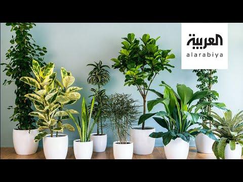 شاهد النباتات المتدلية وطرق العناية بها مع مهندسة زراعية